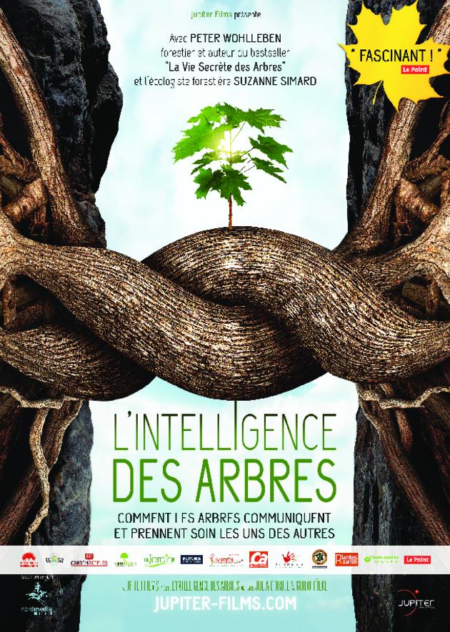 Ciné-débat Le Vendredi 22 novembre à 20h30 FILM : L'INTELLIGENCE DES ARBRES animé par Nathalie Rolland Enseignante à l'Association de Yoga Triskellou